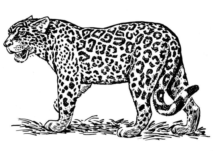 Dibujo para colorear jaguar - Img 16636