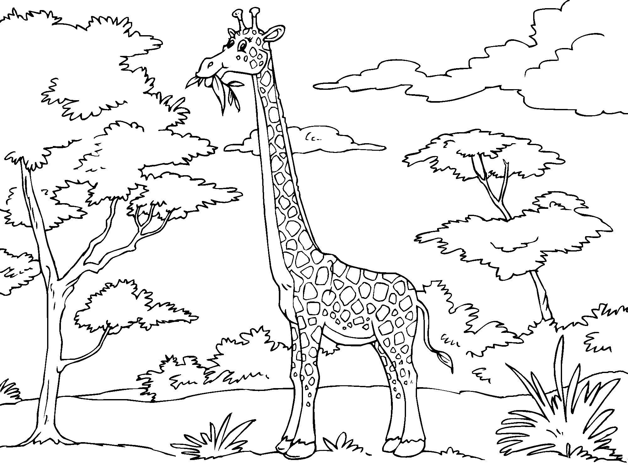 Dibujo para colorear jirafa - Img 23012