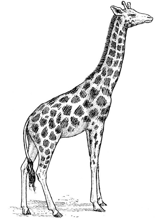 dibujo para colorear jirafa