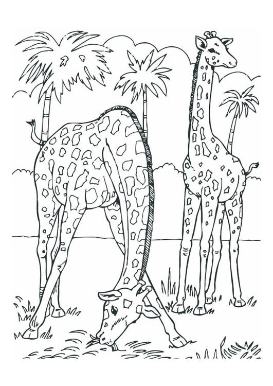 Dibujo para colorear Jirafas - Img 12534