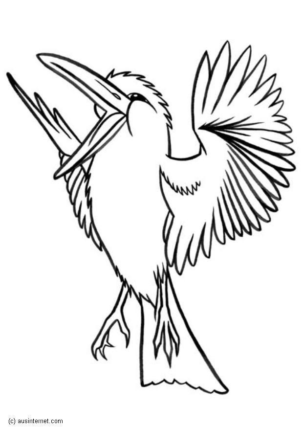 Dibujo Para Colorear Kookaburra Img 5607