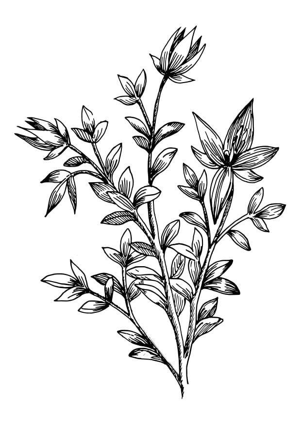 Plant Doodle Background