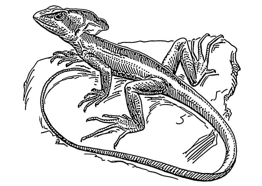 Dibujo para colorear lagarto - basilisco - Img 18908