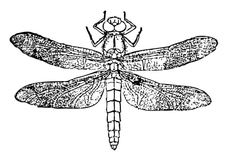 Dibujo para colorear libélula - Img 28461