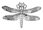 Dibujo para colorear libélula