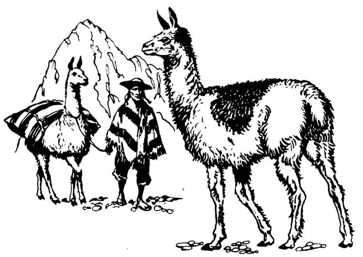 Dibujo Para Colorear Llama Img 16626 Images