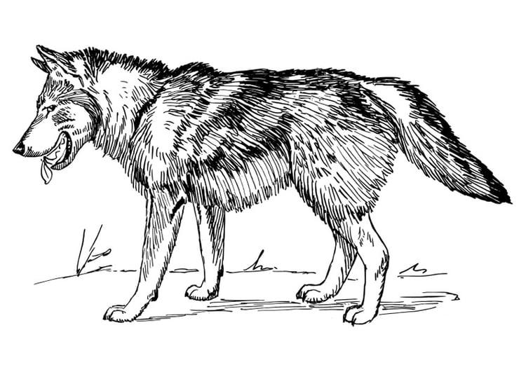 Dibujo para colorear lobo - Img 22785