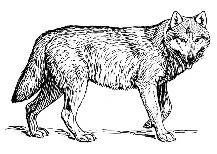 Dibujo para colorear lobo - Img 22786