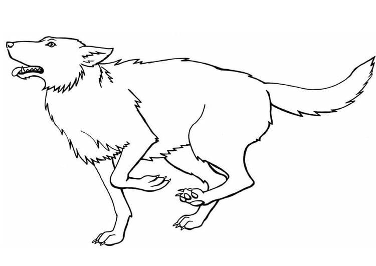 Dibujo para colorear Lobo - Img 8917