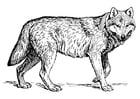 Dibujo para colorear lobo