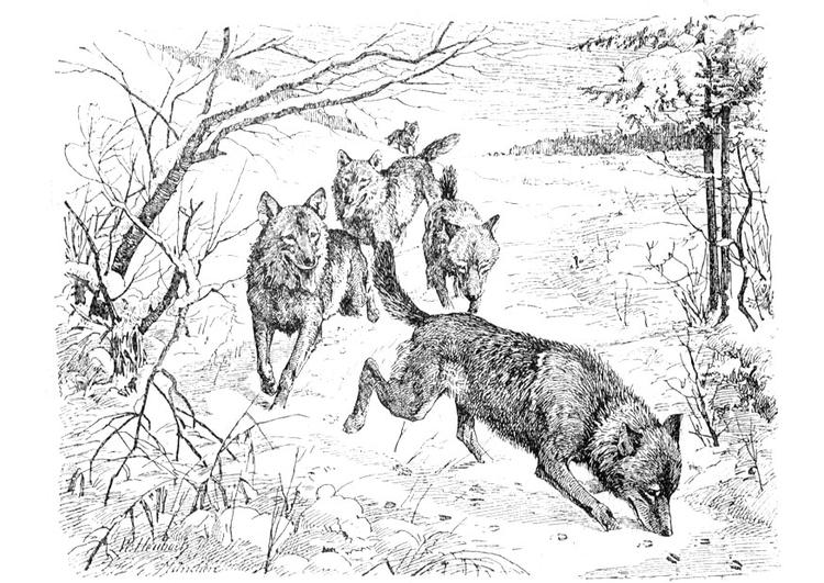 Dibujo para colorear Lobos - Img 9760