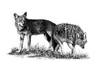 Dibujo para colorear Lobos