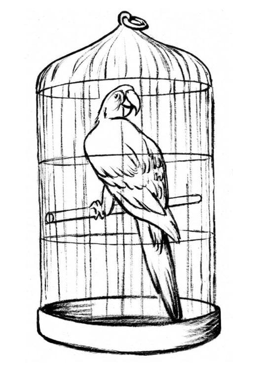 Dibujo para colorear Loro en jaula - Img 8908