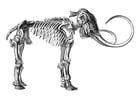 Dibujo para colorear mamut esqueleto