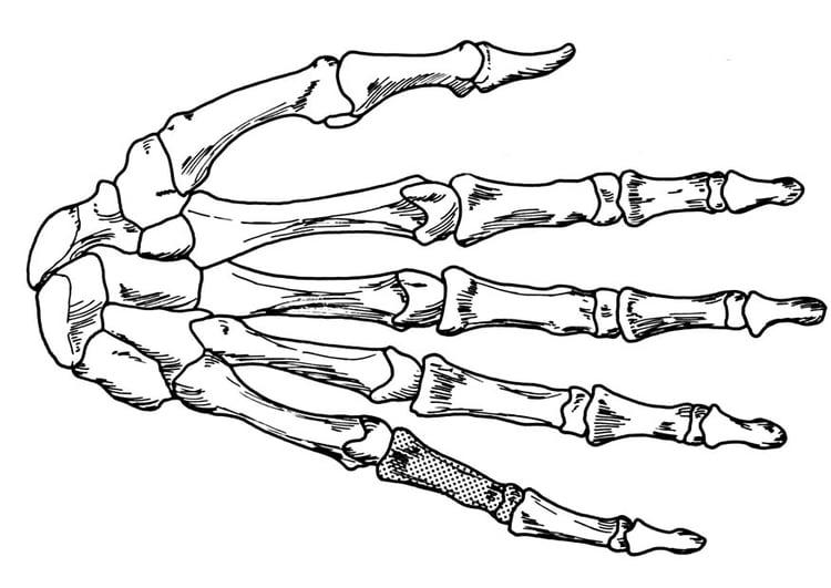 Dibujo para colorear mano  esqueleto  Img 18906