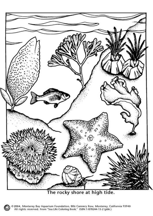 Dibujo Para Colorear Marea Alta En La Costa Dibujos Para