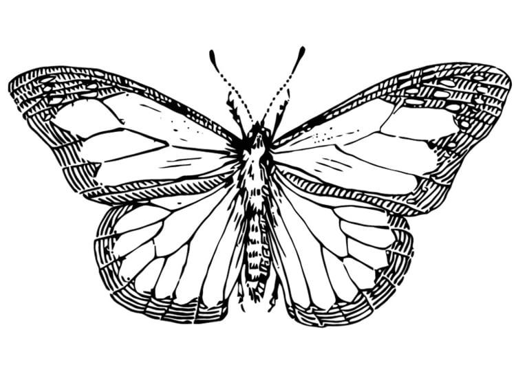 Dibujo para colorear Mariposa - Img 13354