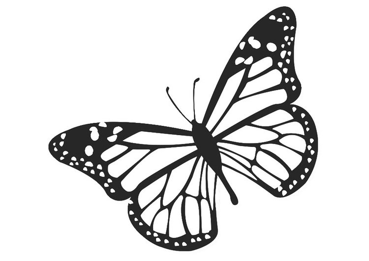 Dibujo para colorear mariposa - Img 20674