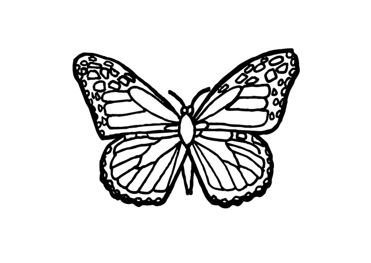 Dibujo Para Colorear Mariposa Img 9700 Images