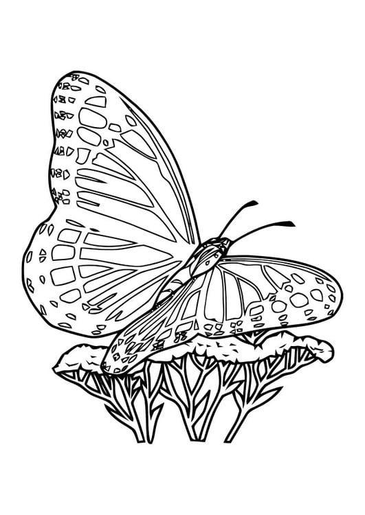 Vlinders En Bloemen Kleurplaat Volwassenen Dibujo Para Colorear Mariposa Img 10920