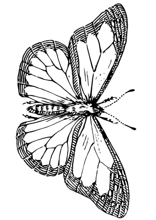 Dibujo Para Colorear Mariposa Img 13354 Images