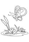 Dibujo para colorear mariposa sobre lirios de agua