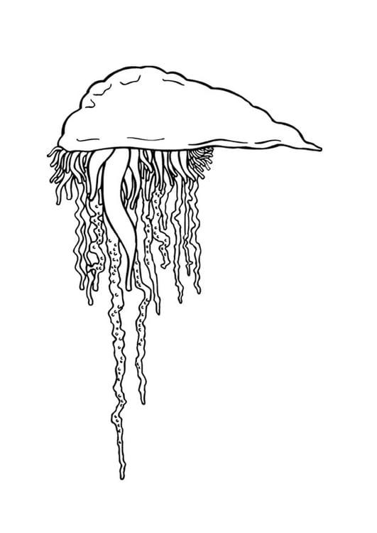 Dibujo para colorear Medusa - Img 9373