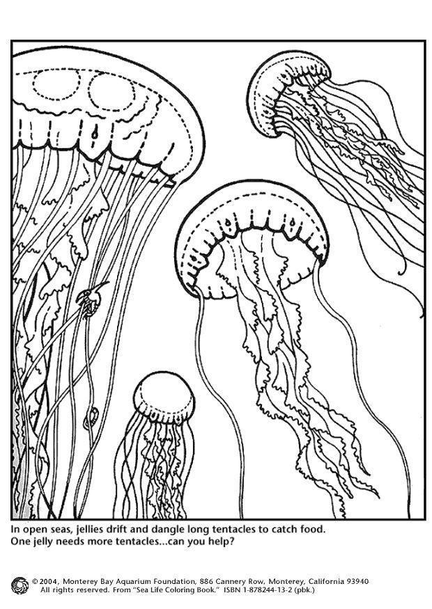 dibujo para colorear medusas  dibujos para imprimir