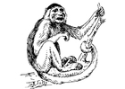 Dibujo para colorear mono capuchino