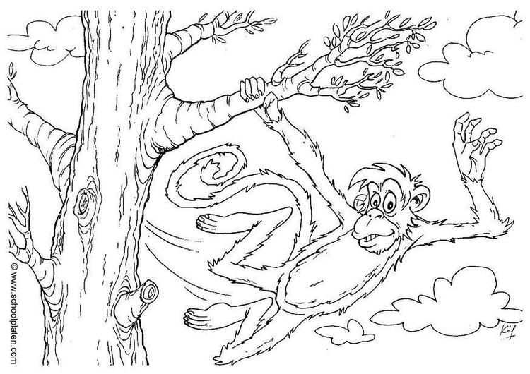 Dibujo para colorear Mono - Img 2863