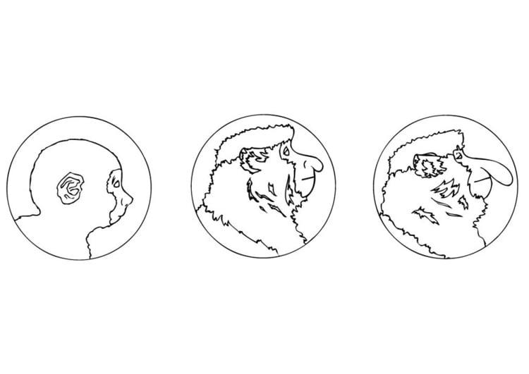 Dibujo para colorear Mono narigudo - Img 9471