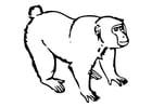 Dibujo para colorear Mono