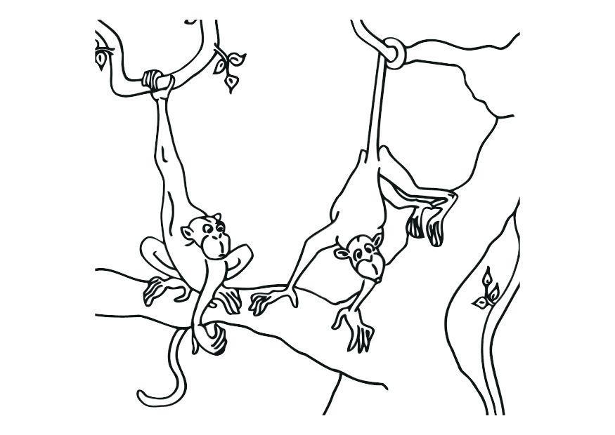 Dibujo Para Colorear Monos Img 12532