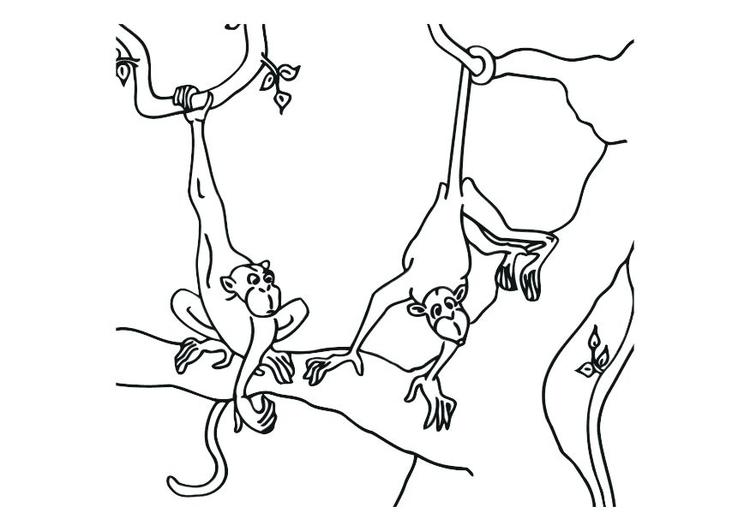 Dibujo para colorear Monos - Img 12532
