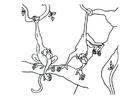 Dibujo para colorear Monos