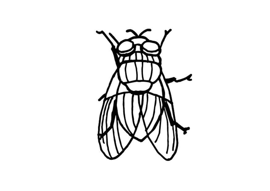 Dibujos De Insectos Para Colorear: Dibujo Para Colorear Mosca
