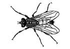 Dibujo para colorear mosca