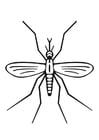Dibujo para colorear mosquito