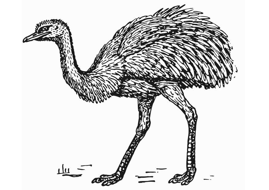 Dibujo para colorear ñandú - avestruz - Img 13278