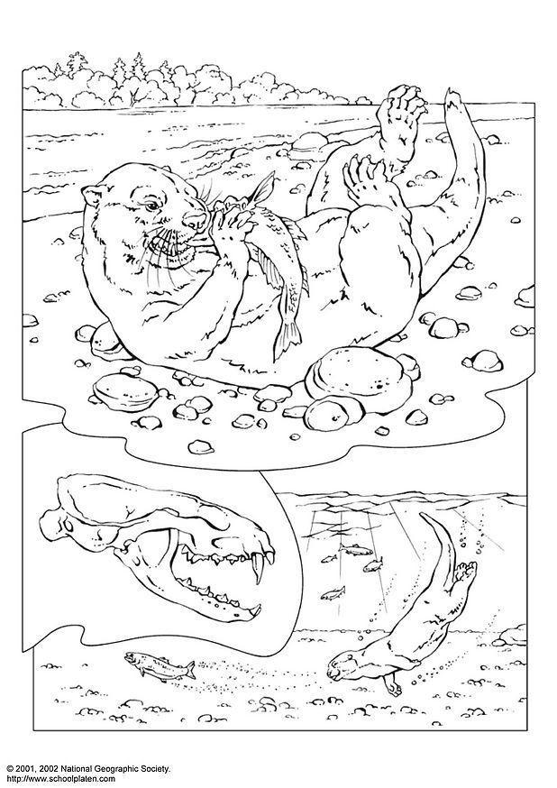 Excelente Página Para Colorear De Nutria Patrón - Dibujos Para ...