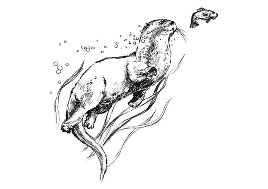 Otter Kleurplaat Dibujo Para Colorear Nutria Dibujos Para Imprimir Gratis