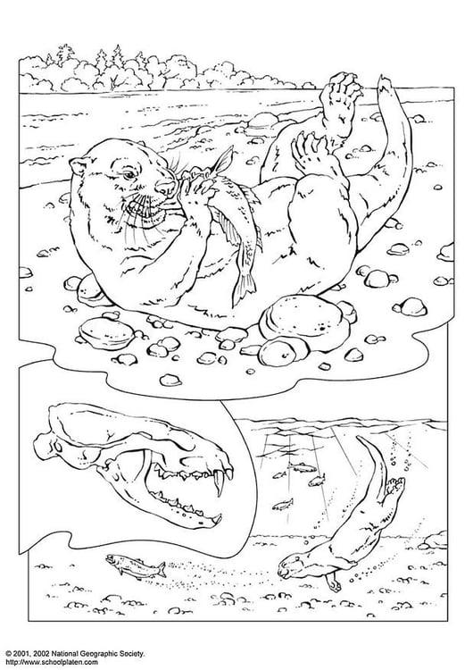 Dibujo para colorear Nutria - Img 3073