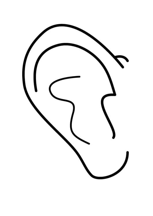 Dibujo para colorear oreja - Img 26932