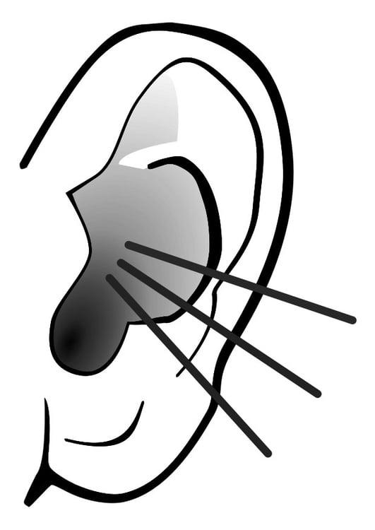 Dibujo para colorear oreja - sonido - Img 29283
