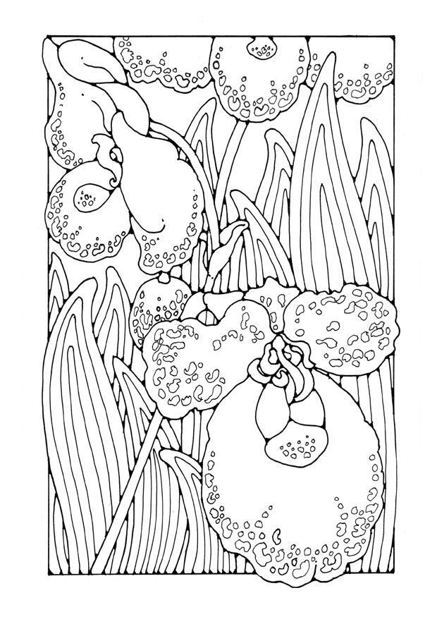 Volwassen Kleurplaat Bloemen Dibujo Para Colorear Orqu 237 Dea Dibujos Para Imprimir Gratis