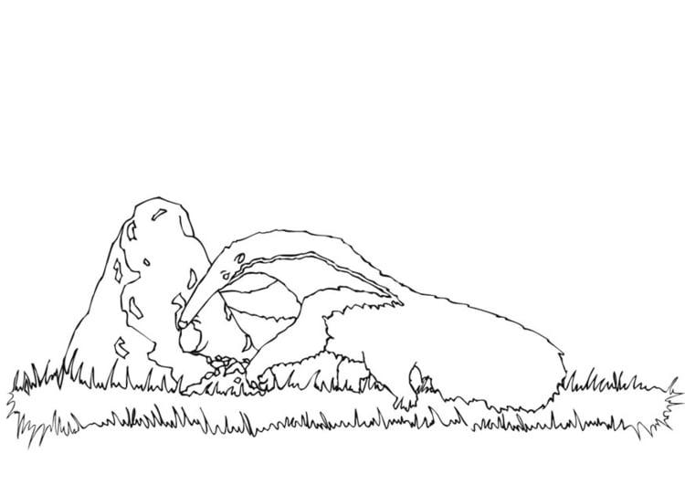 Dibujo para colorear Oso hormiguero abriendo un nido - Img 9440