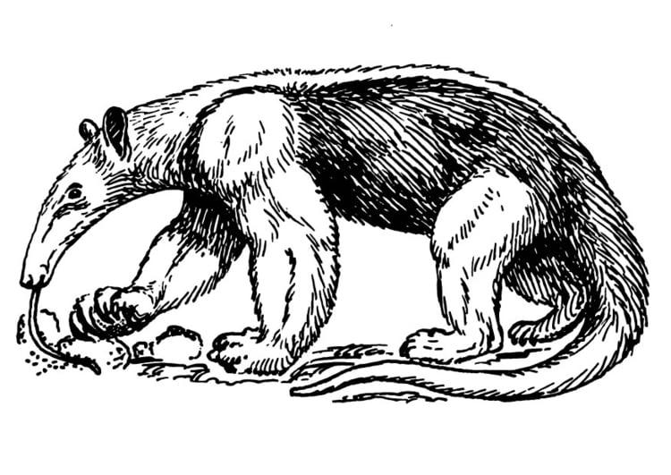 Dibujo para colorear Oso hormiguero - Img 13712