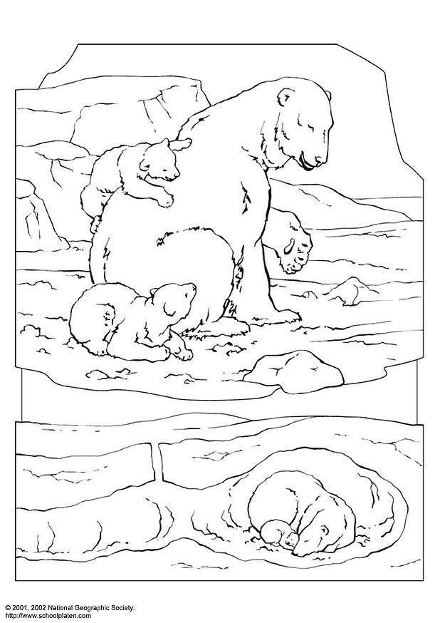 Dibujo Para Colorear Oso Polar Img 3063
