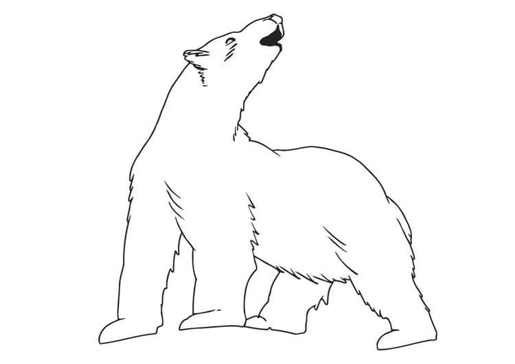 Dibujo Para Colorear Oso Polar Img 30139