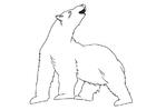 Dibujo para colorear oso polar